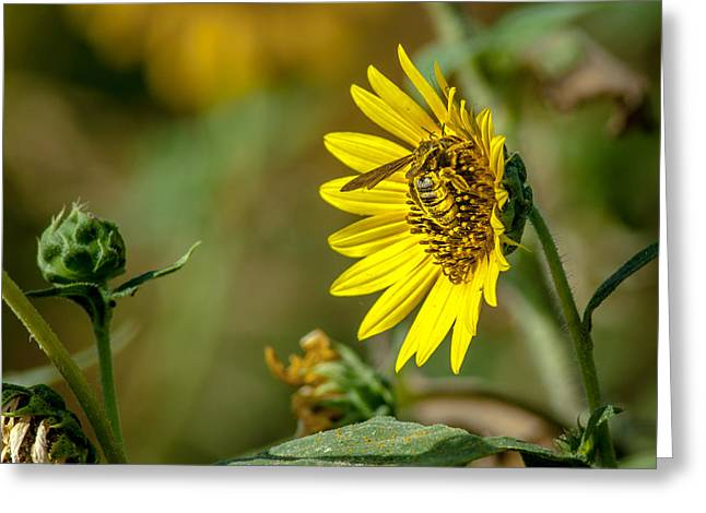 Pollination Of A Flower Greeting Card by Robert Frederick
