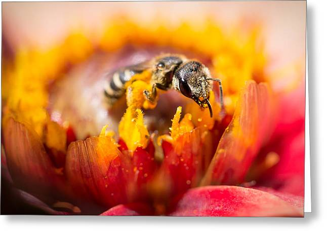 Greeting Card featuring the photograph Pollination by Priya Ghose