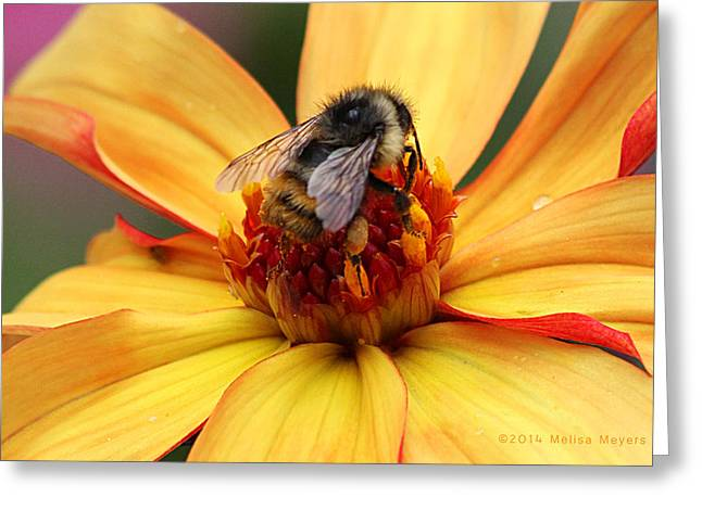 Pollinator  Greeting Card by Melisa Meyers