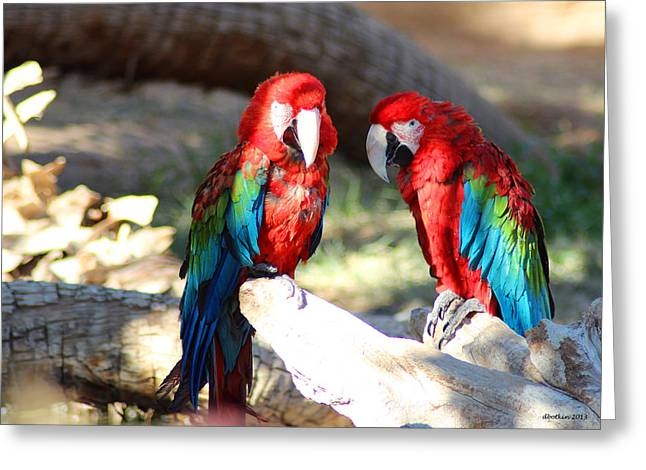 Polly And Pauly Greeting Card by Dick Botkin