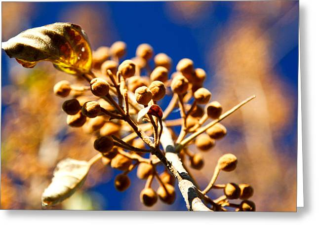 Pollyana Seed Pods Greeting Card by Christopher McPhail
