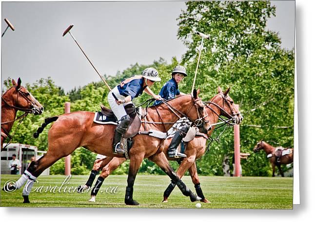 Polo Play I Greeting Card by Sherri Cavalier