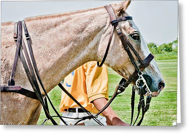 Polo Pony Greeting Card by Sherri Cavalier
