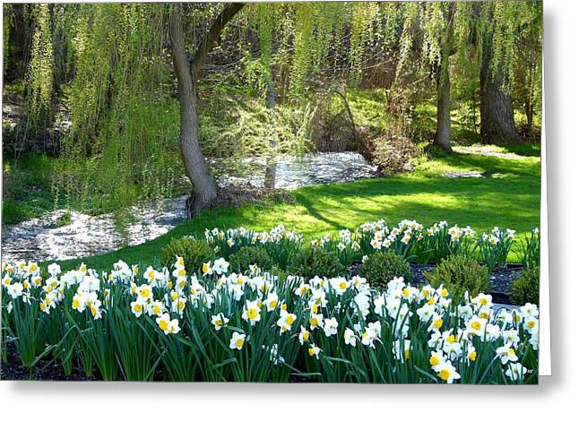 Polson Park Daffodils Greeting Card by Will Borden