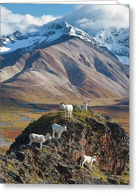 Polychrome Pass, Denali National Park Greeting Card