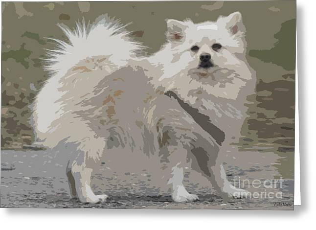 Pomeranian Dog Greeting Card by Jivko Nakev
