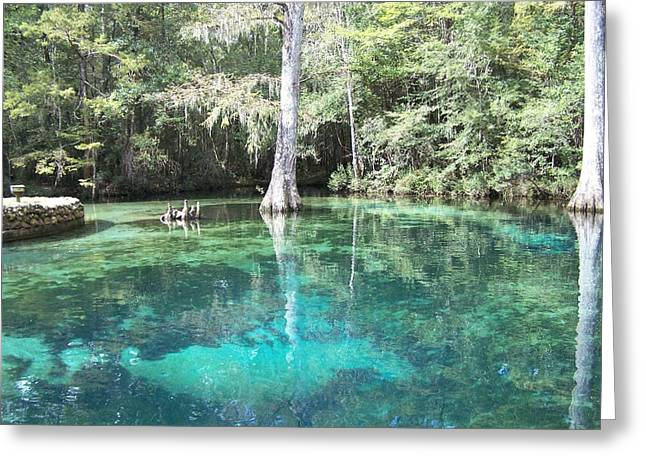 Ponce De Leon Springs Greeting Card by Michele Kaiser