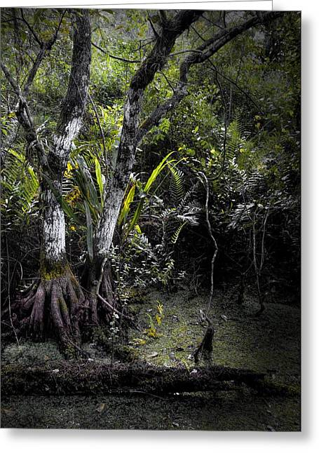 Pond Apple Greeting Card by Rudy Umans