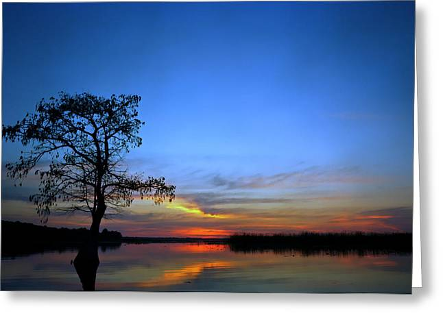 Pond Cypress. Lake Gentry Greeting Card by Chris  Kusik