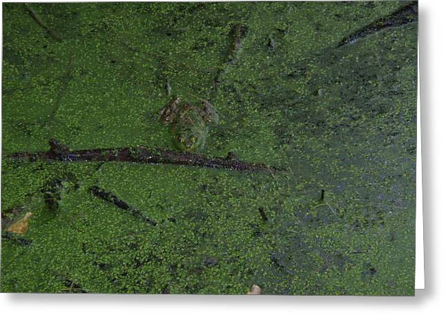 Greeting Card featuring the photograph Pond Eyes by Robert Nickologianis
