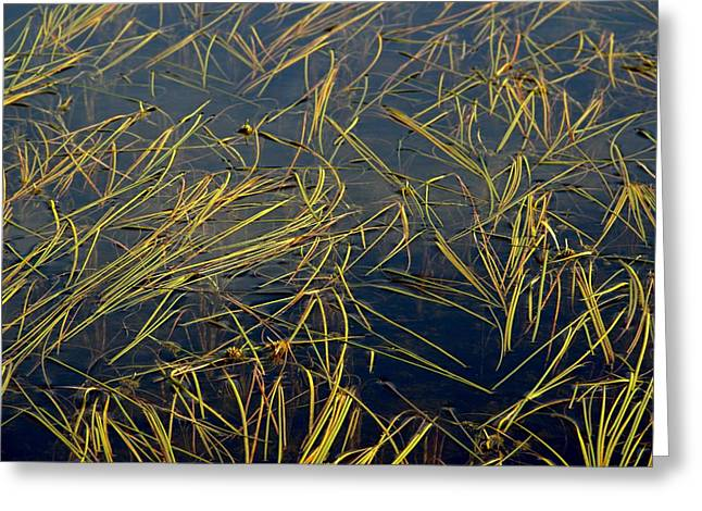 Pond Grass Greeting Card by Marv Russell