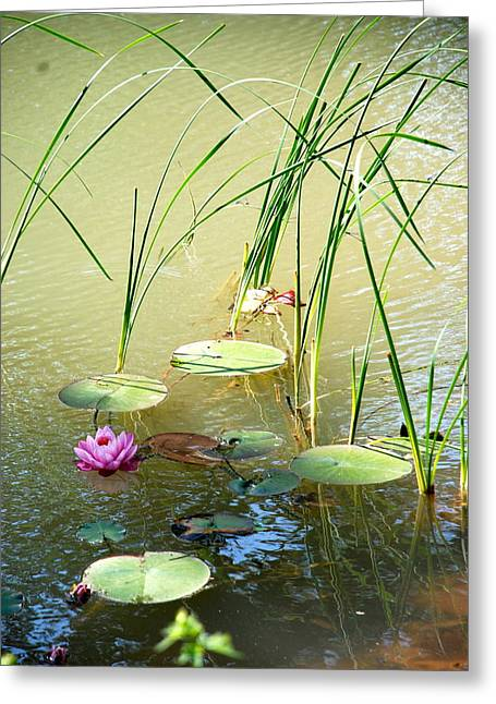 Pond  Reflections Greeting Card by Elmer Baez
