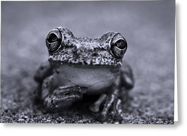 Pondering Frog Bw Greeting Card by Laura Fasulo