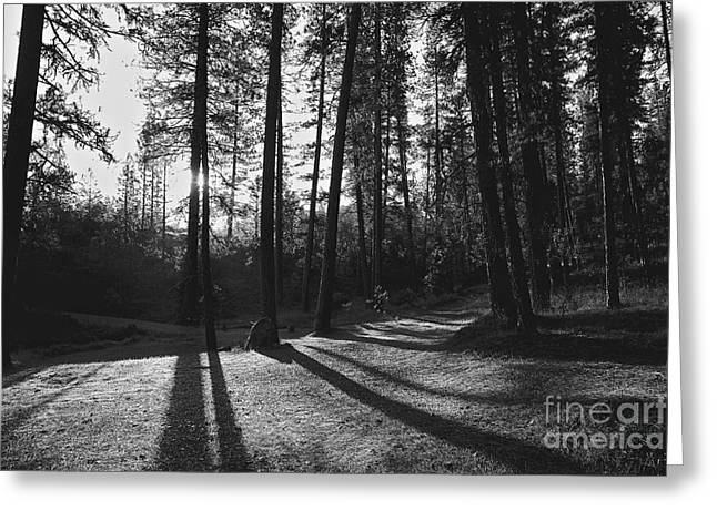 Greeting Card featuring the photograph Ponderosa Shadows by Lennie Green