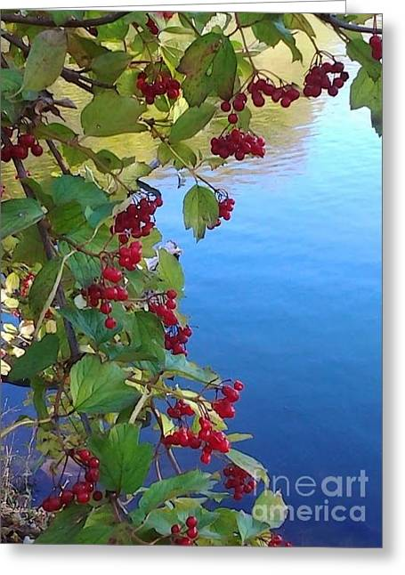 Pondview Greeting Card by Susan Townsend