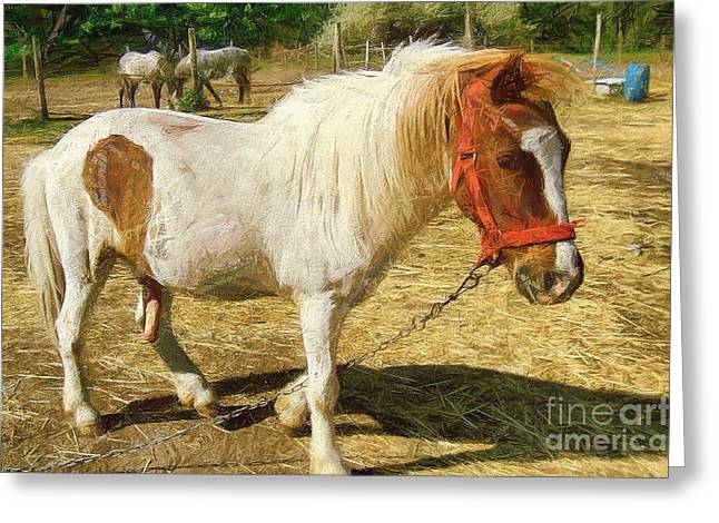 Ponies On The Farm Greeting Card
