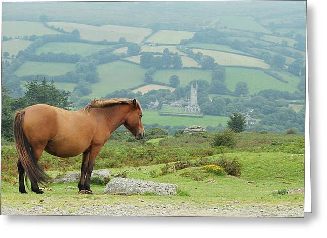 Pony Atop Hill Greeting Card by Jf Halbrooks