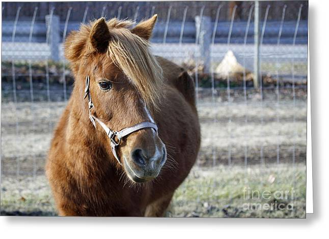 Pony Greeting Card by Denise Pohl
