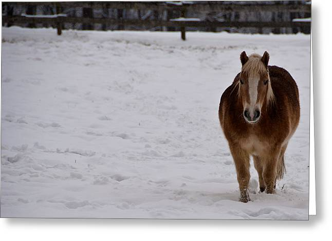 Pony In Snow Greeting Card by Nickaleen Neff