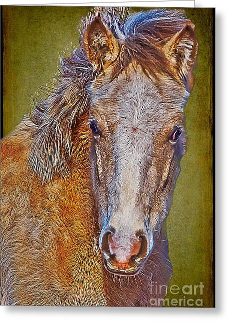 Pony Portrait  Greeting Card