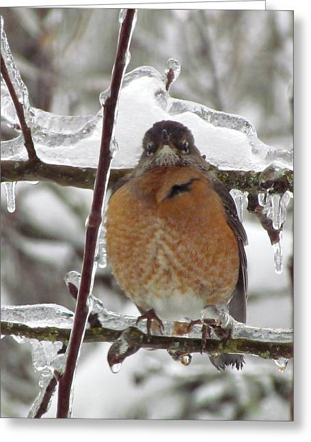 Greeting Card featuring the photograph Poor Robin by I'ina Van Lawick