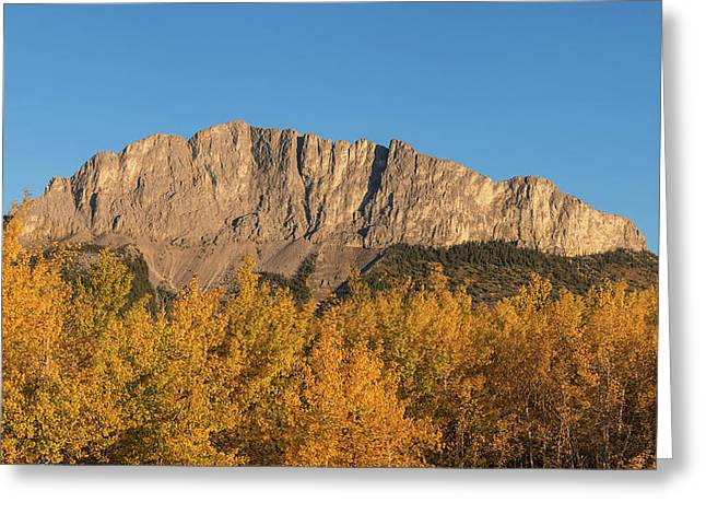 Poplar Trees In Autumn, Mount Yamnuska Greeting Card by Panoramic Images