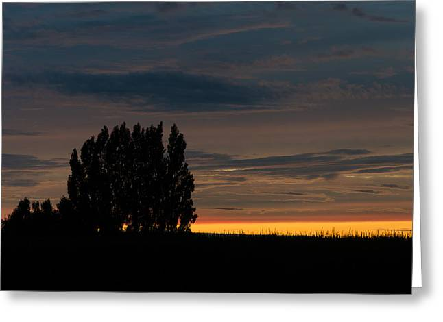 Poplars Flanders Sunset Greeting Card
