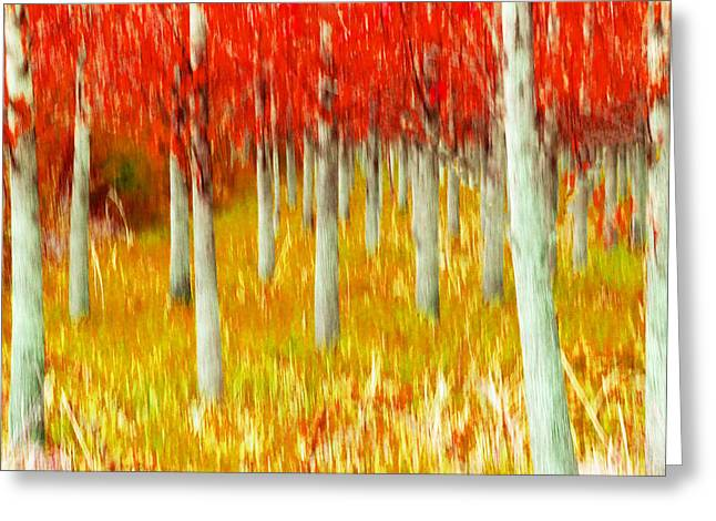 Poplars Greeting Card by Michele Wright