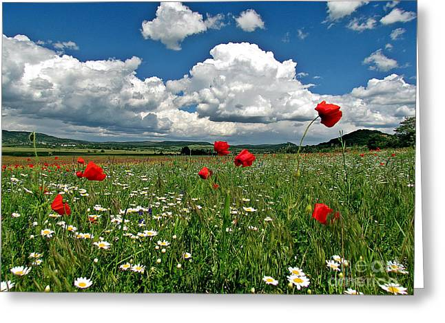 Poppied Landscape Greeting Card