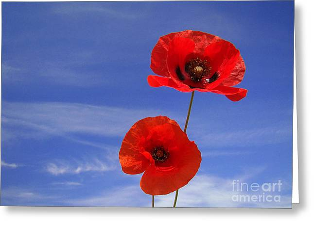 Poppies 02 Greeting Card by Giorgio Darrigo