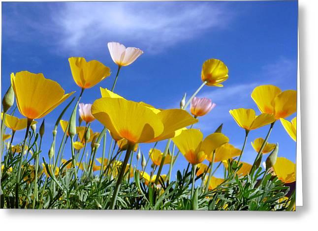 Poppies And Blue Arizona Sky Greeting Card