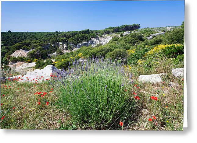 Poppies And Lavender In Bloom, Brac Greeting Card by Panoramic Images