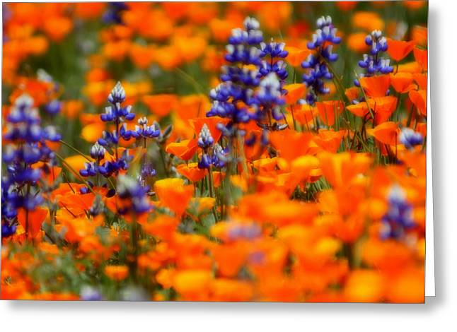 Poppies And Lupine Greeting Card by Bill Keiran