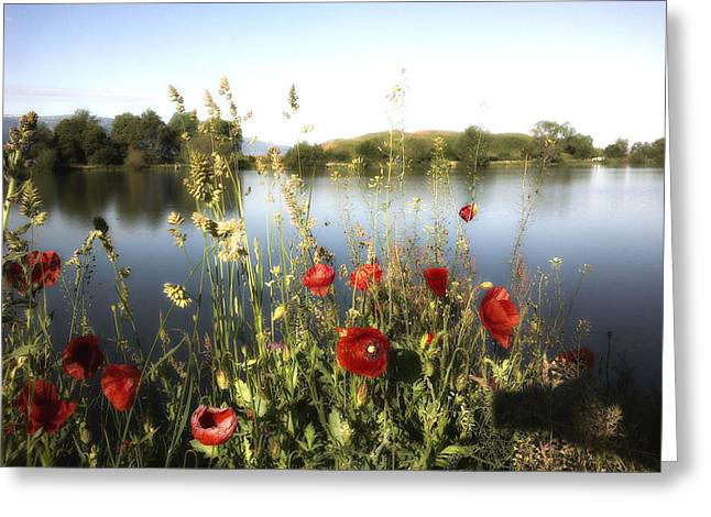 Poppies At Lake Greeting Card