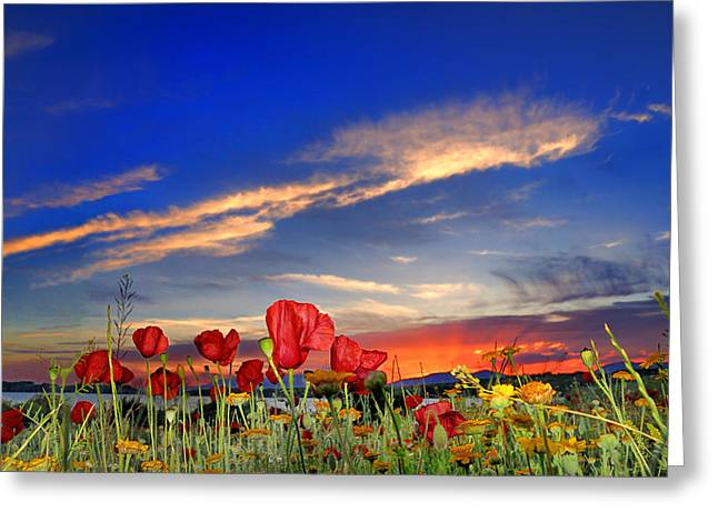 Poppies At Sunset Greeting Card by Guido Montanes Castillo