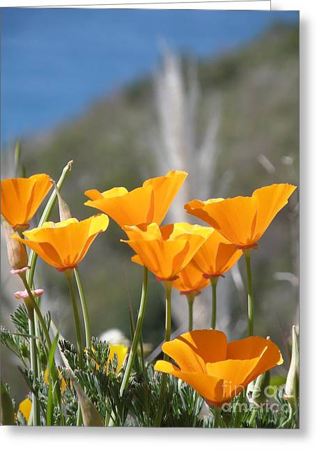 Poppies Greeting Card by Bev Conover