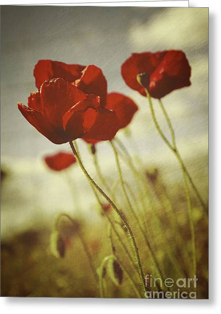 Poppies Greeting Card by Carlos Caetano