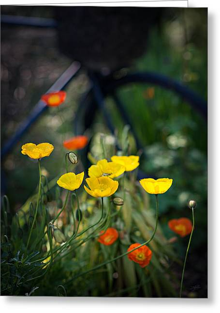 Greeting Card featuring the photograph Poppies by Doug Gibbons
