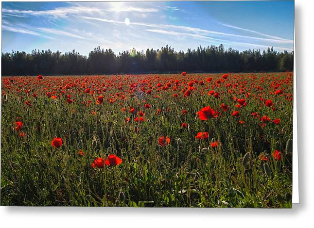 Greeting Card featuring the photograph Poppies Field Forever by Meir Ezrachi