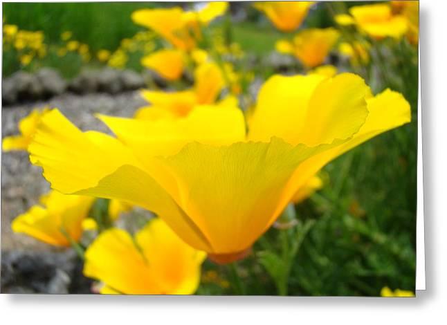Poppies Flowers Meadow Art Prints Orange Greeting Card by Baslee Troutman