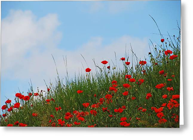 Poppies In A French Landscape Greeting Card