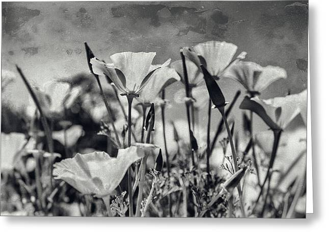 Poppies In Mono Greeting Card by Georgia Fowler