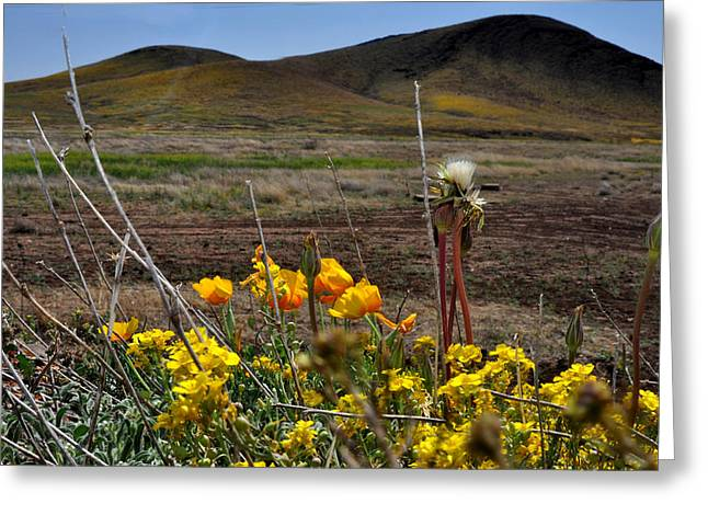 Poppies In The Field Chiracahua Mountains Greeting Card by Diane Lent