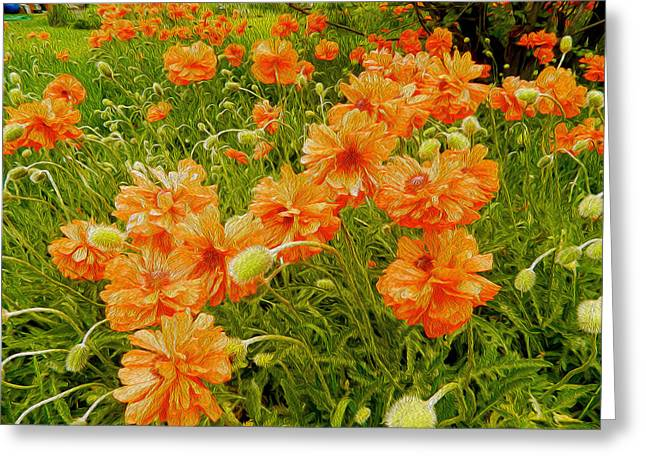 Poppies Jamestown Oil 2 Greeting Card by Dee Meyer