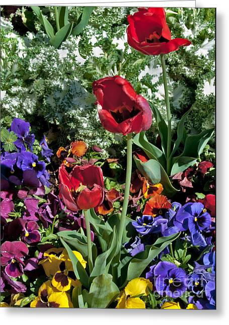 Greeting Card featuring the photograph Poppies by Mae Wertz