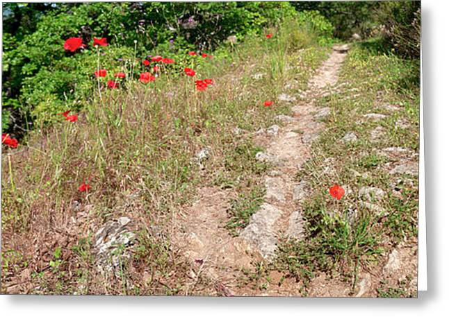 Poppies On The Way To Caseneuve Greeting Card