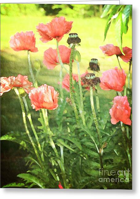 Greeting Card featuring the photograph Poppies by Rosemary Aubut