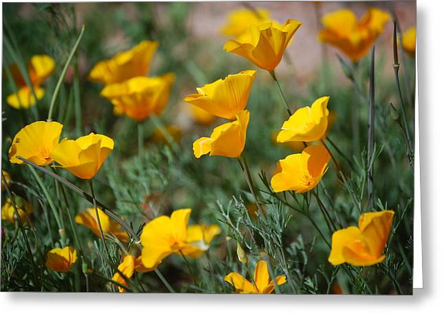 Greeting Card featuring the photograph Poppies by Tam Ryan
