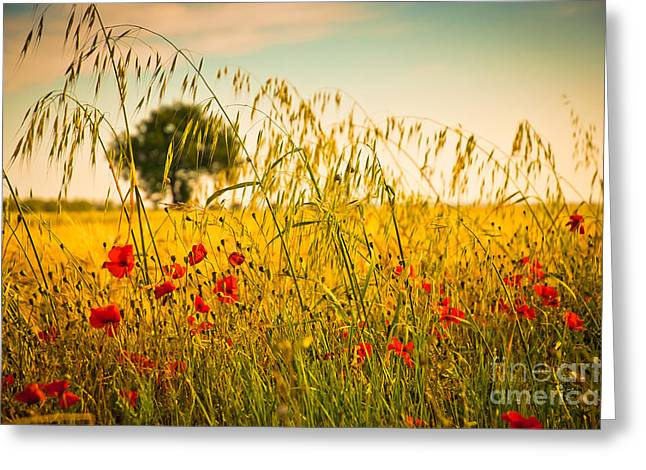Poppies With Tree In The Distance Greeting Card