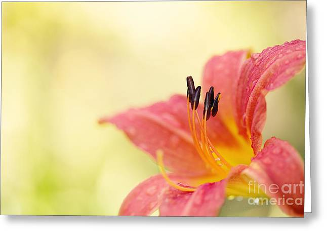 Popping Fresh Greeting Card by Beve Brown-Clark Photography